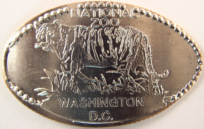 click for larger picture of Tiger - National Zoo elongated quarter